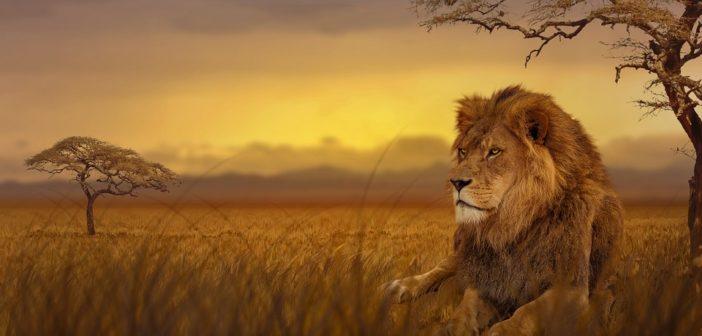 Top 4 des meilleures adresses pour un safari mémorable en Afrique